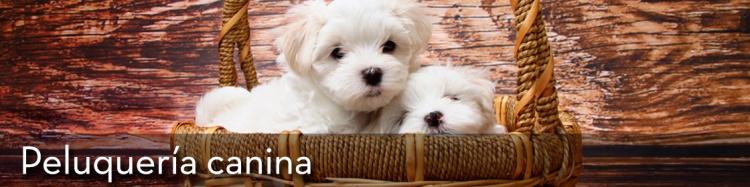 06_peluqueria-canina_llcenter_oficios_capacitacion_chile